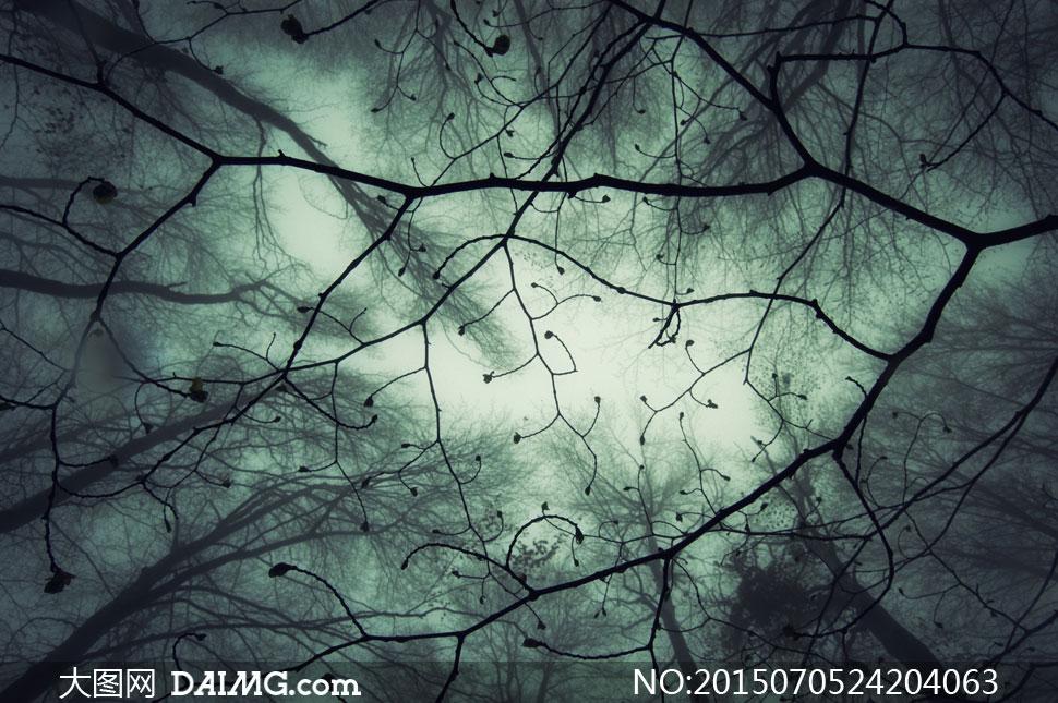 黑暗阴森氛围树木风景摄影高清图片 - 大图网设计素材下载