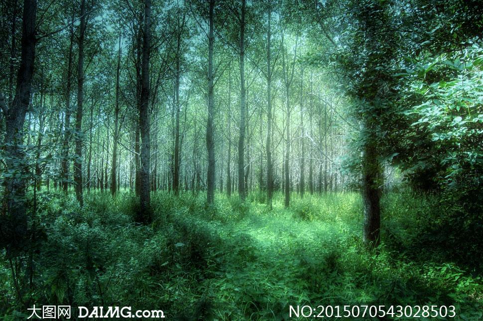郁郁葱葱树林草地风景摄影高清图片 - 大图网设计素材