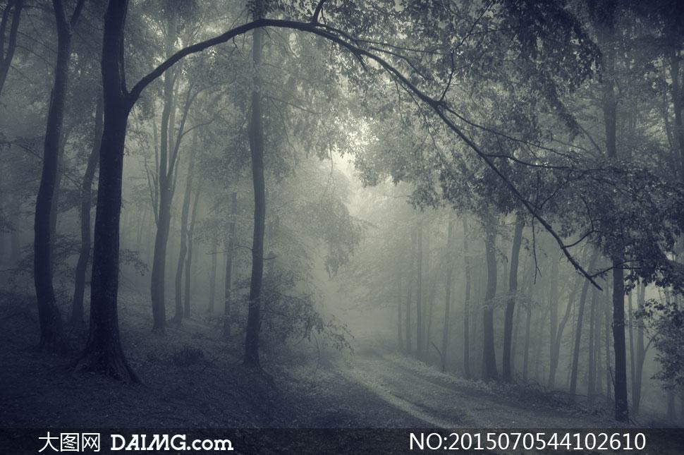 高清大图图片素材摄影自然风景风光树木大树树林茂密茂盛雾气神秘