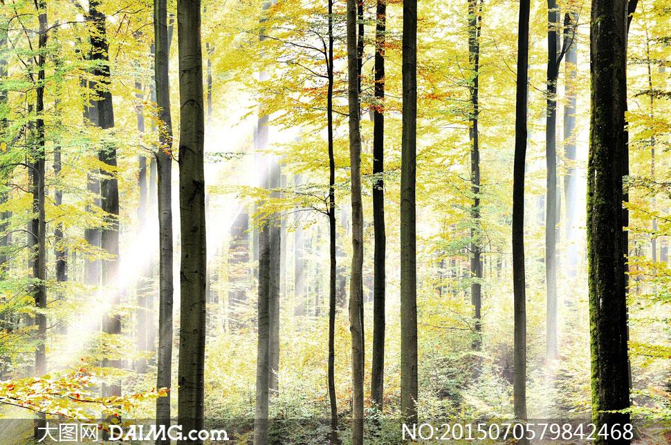 关键词: 高清大图图片素材摄影自然风景风光树木大树树林茂密茂盛阳