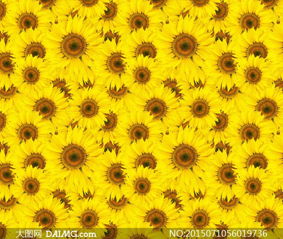 向日葵花无缝拼贴背景图案高清图片