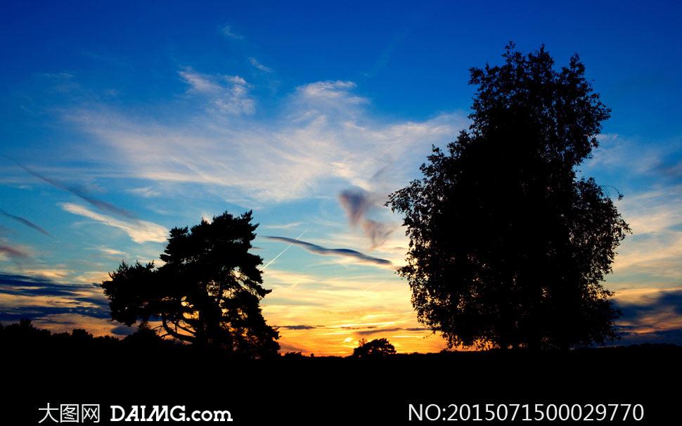 夕阳下的大树剪影摄影图片