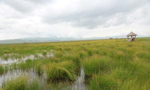 湿地公园草丛摄影图片