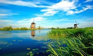 蓝天下的河流和水草摄影图片