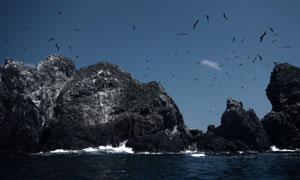 蓝天山石与飞翔的海鸟摄影高清图片