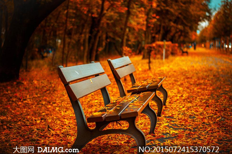 关键词: 高清大图图片素材摄影自然风景公园树叶落叶秋天秋季长椅