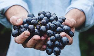 捧在手心里的新鲜葡萄摄影高清图片