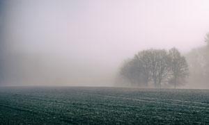 雾气笼罩中的树木农田摄影高清图片