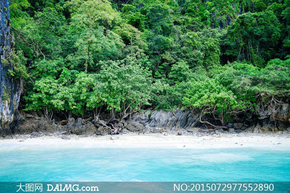 在海边茂密的树丛风景摄影高清图片
