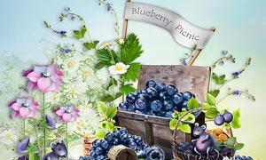 绿叶蓝莓与蜜蜂花朵等欧美剪贴素材