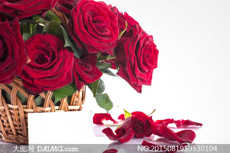 卡片花瓣与花篮里的玫瑰花高清图片
