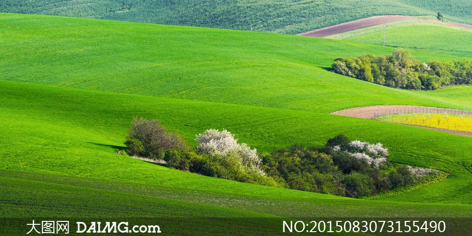 葱茏树木与农场等风景摄影高清图片 - 大图网设计素材