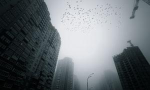 楼房建筑与城市上空的飞鸟高清图片