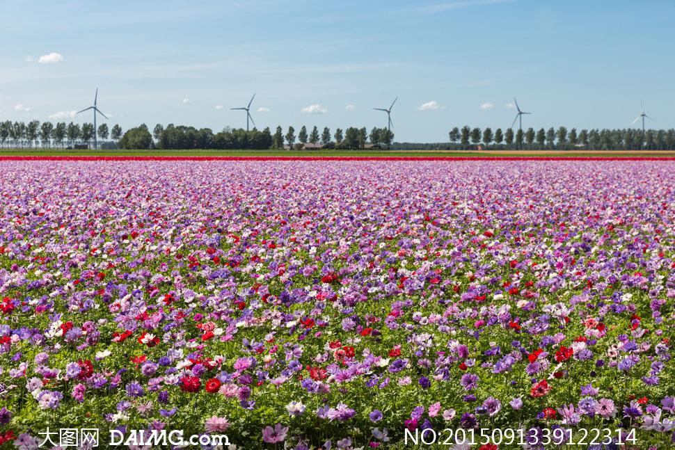 关键词: 高清大图图片素材摄影自然风景风光鲜花花朵花卉植物花海