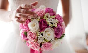 新娘手里的玫瑰花微距摄影高清图片