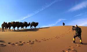 内蒙古阿拉善旗沙漠驼队摄影图片