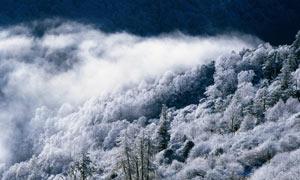 冬季山间唯美的山林雾凇摄影图片