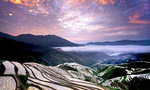 山坡唯美的水稻梯田摄影图片