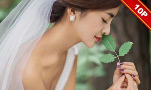 {暮色森林}婚纱照模板