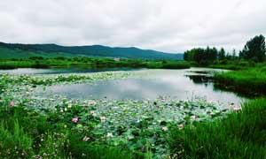 镜泊湖美丽荷花摄影图片