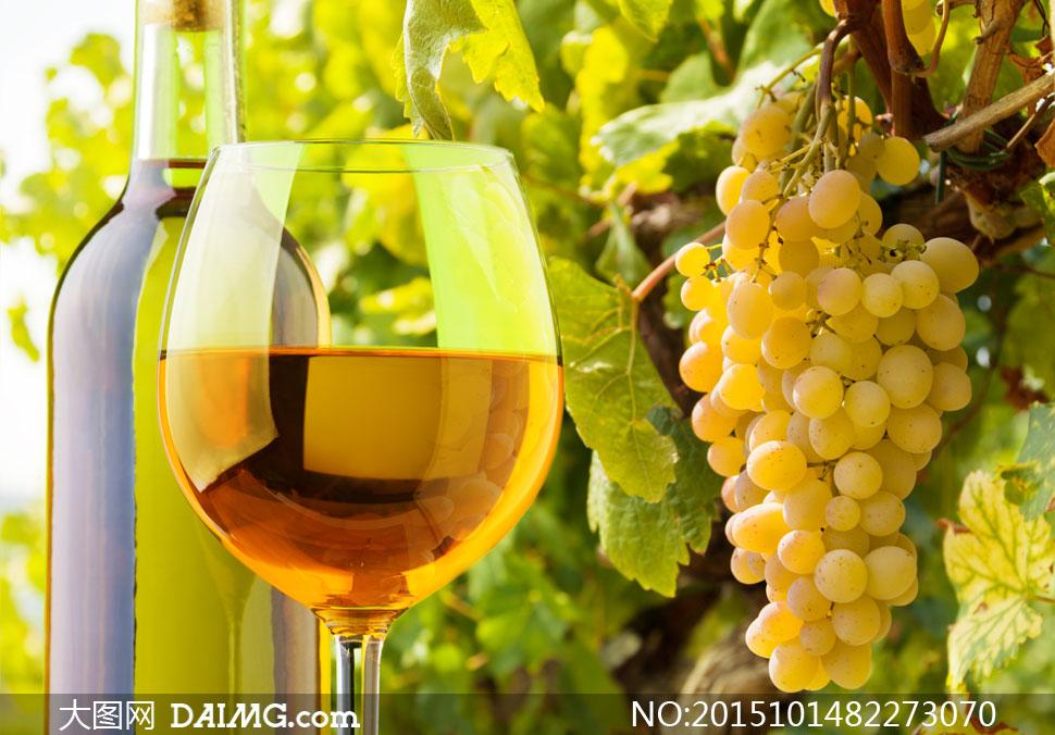 葡萄架上的葡萄等特写摄影高清图片