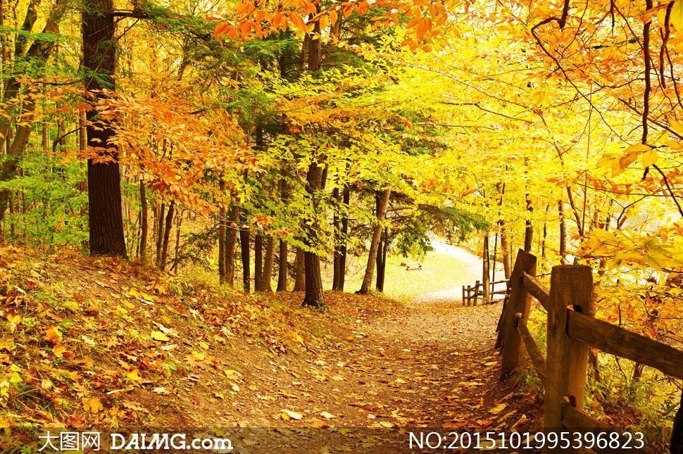 高清摄影大图图片素材秋天秋季自然风景风光大树树木