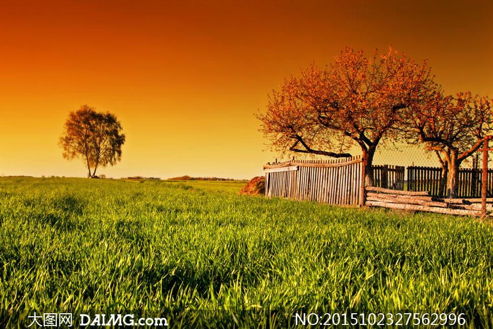 天空田地农田庄稼地农作物青草绿色草地大树树木篱笆护栏栅栏草丛木头