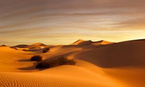 天空云彩与沙漠植物等摄影高清图片