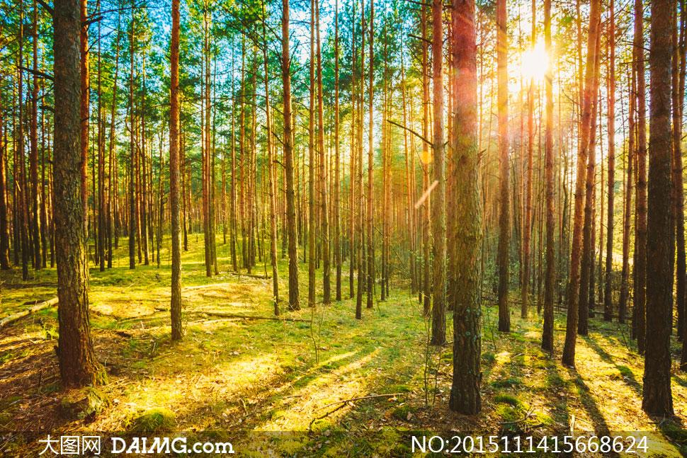 树木风景与耀眼的阳光摄影高清图片
