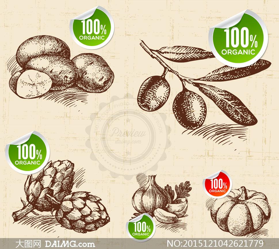 手绘素描水果蔬菜矢量素材集合v.05