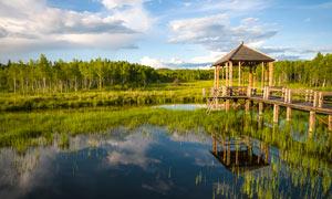 河流草丛和树林美景摄影图片
