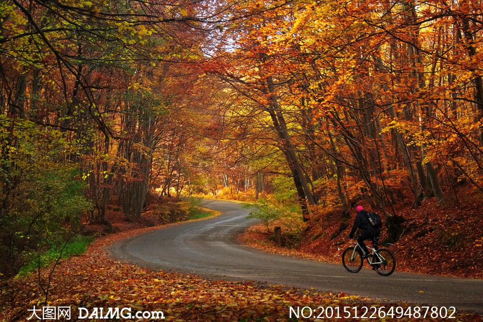 高清摄影图片素材大图人物骑行者树木大树树林秋天