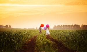 手拉手走在玉米地里的新人高清图片