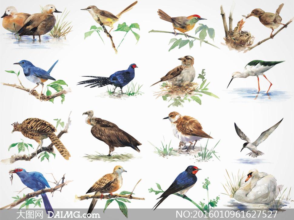 美术水彩画花鸟小鸟喜鹊鸭子白鹅树枝绿叶叶子树叶