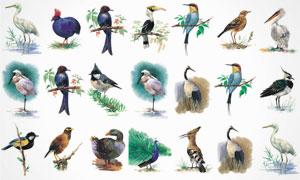 鸟类等水彩绘画设计 澳门线上必赢赌场集合V2