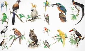 鸟类等水彩绘画设计 澳门线上必赢赌场集合V3