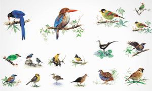 鸟类等水彩绘画设计 澳门线上必赢赌场集合V4