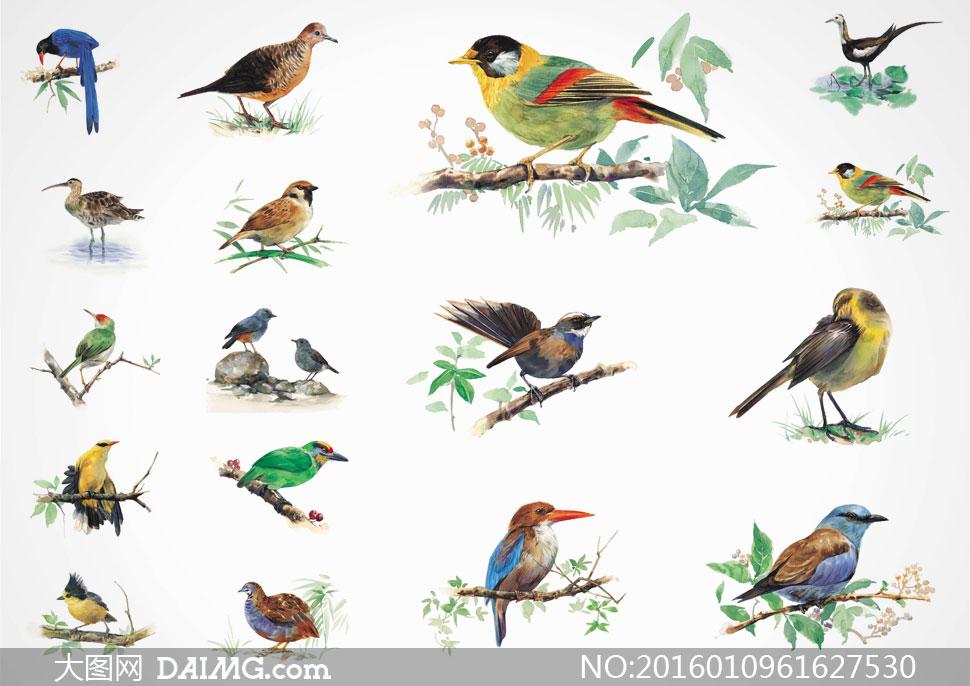 素材大图文化艺术绘画美术水彩画花鸟小鸟树枝绿叶叶子树叶石头岩石