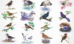 鸟类等水彩绘画设计 澳门线上必赢赌场集合V5