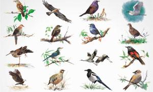 鸟类等水彩绘画设计 澳门线上必赢赌场集合V6