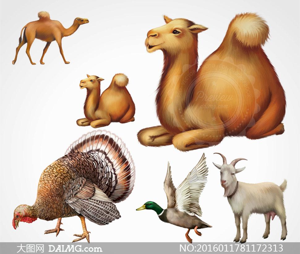 山羊骆驼与火鸡等逼真动物矢量素材