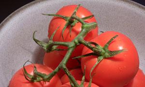 放在碗里的几个西红柿摄影高清图片