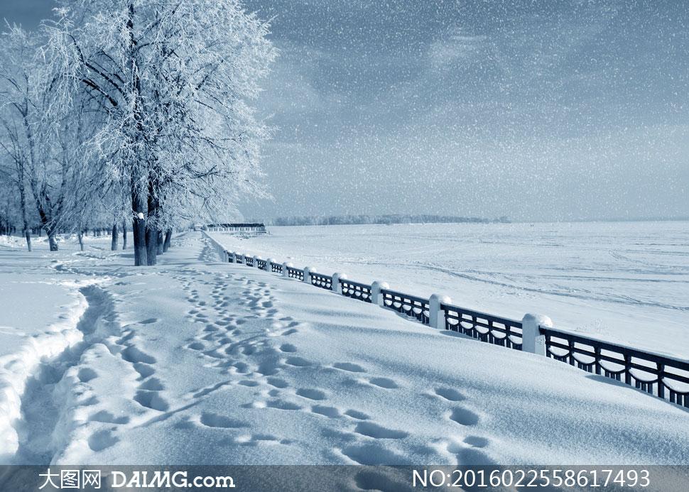 大树冬天冬季寒冷积雪雪地白雪下雪天空脚印栏杆护栏