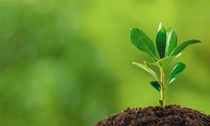 汲取土壤营养的小幼苗摄影高清图片