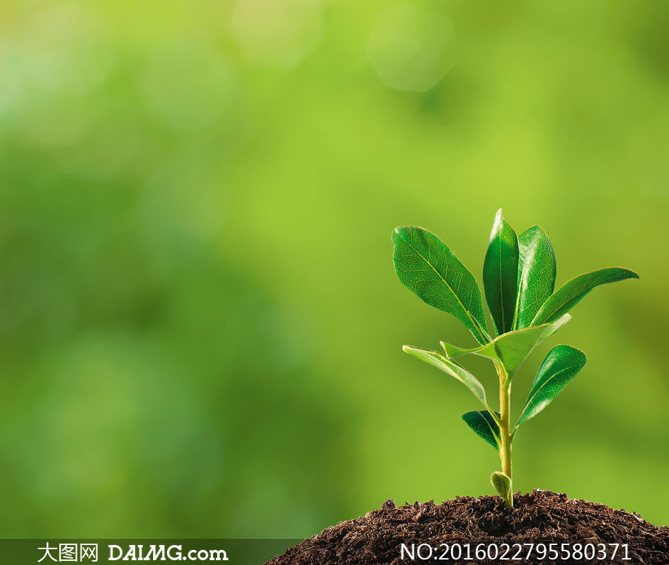 生态环保节能绿叶叶子树叶植物幼苗土壤泥土散景光斑