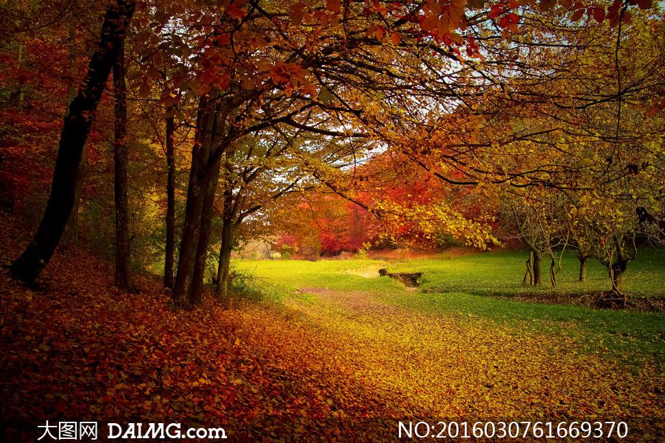 关 键 词: 高清大图图片素材摄影自然风景风光秋天秋季大树树木树林