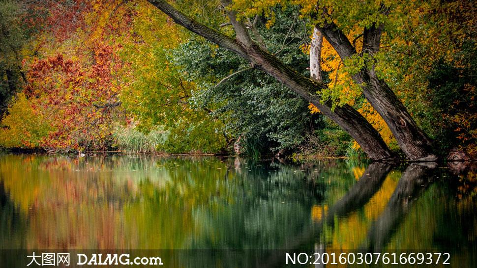 河边茂密树林自然风光摄影高清图片