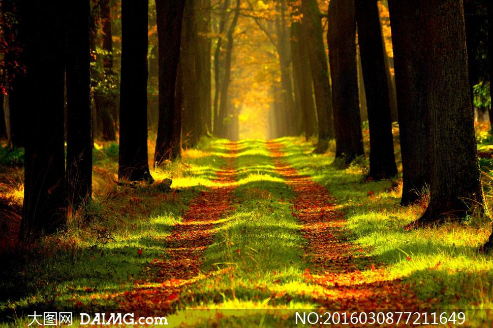 風景風光大樹樹木樹林光線陽光茂密茂盛秋天秋季落葉樹葉葉子紅葉青草