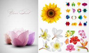 逼真花朵与演变效果标志等矢量素材