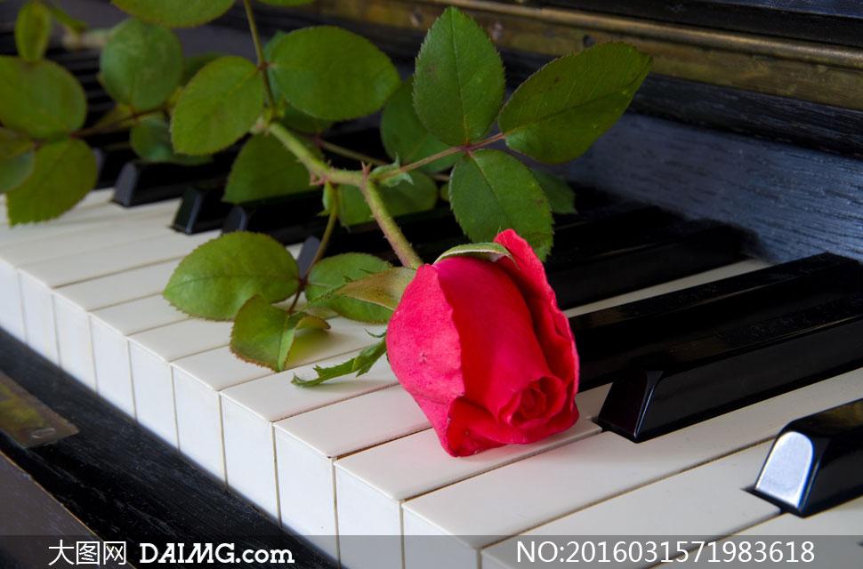 钢琴琴键上的绿叶红花摄影高清图片